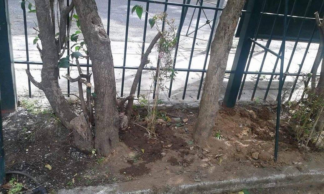 Περιβαλλοντικό Πρόγραμμα «Η αυλή του σχολείου μου»